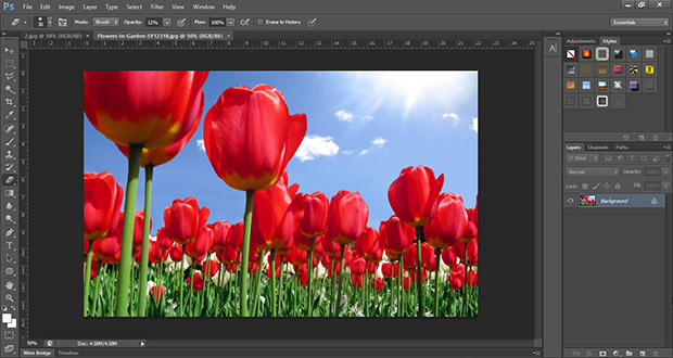 Image of red tulips opened in Photoshop