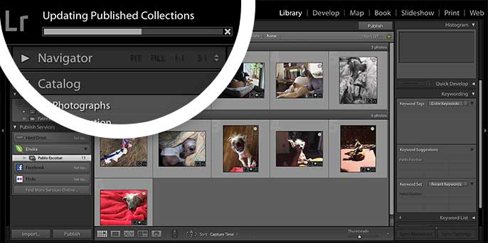 A progress bar will appear in Lightroom when you Publish a Collection to show the progress of the changes.