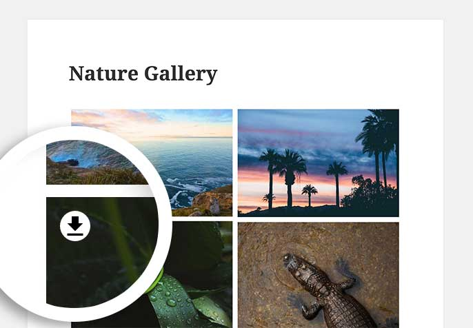 The Download Button will appear over the gallery images on hover.