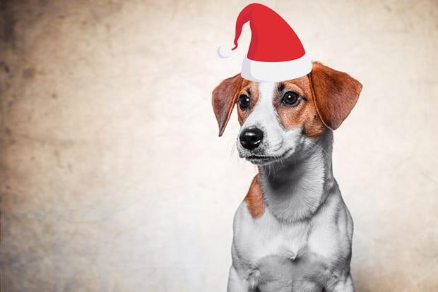 Dog Hat Photo