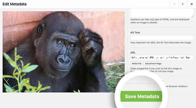 Edit the metadata for your image and save the changes.