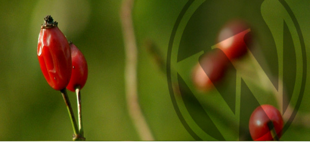 a couple of berries still on the plant, with a logo watermarking the image