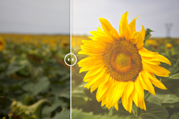An example of the Sunflare Luminar preset, used on an image of a sunflower in a field