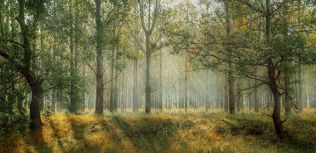 A wide shot of a bright forest, with sunbeams coming down between the trees