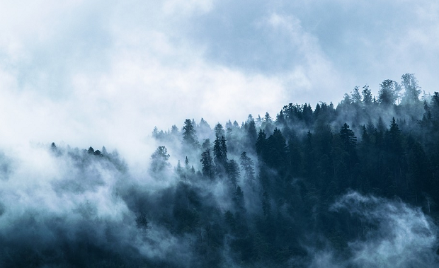 A forest covered in a dense layer of bluish fog