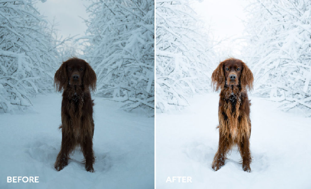 A before and after image of this preset, used on an image of a dog in the snow