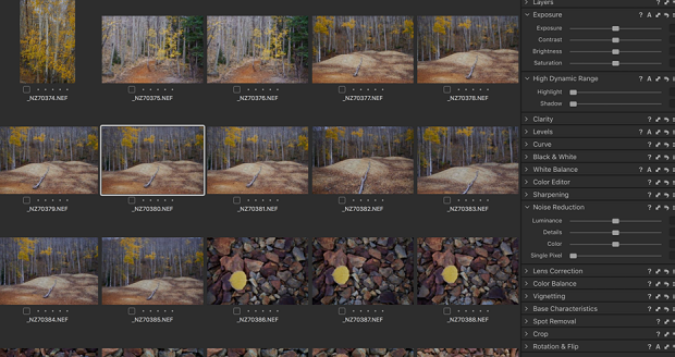 A collection of photos of a forest loaded into Capture One
