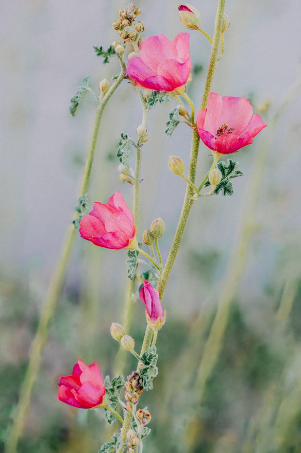 Image of stalk of pink flowers with blurred background edited with presets