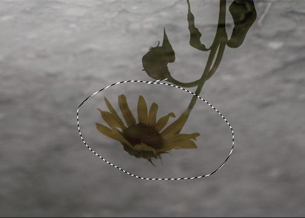 Daisy's reflection in water circled using the Patch tool