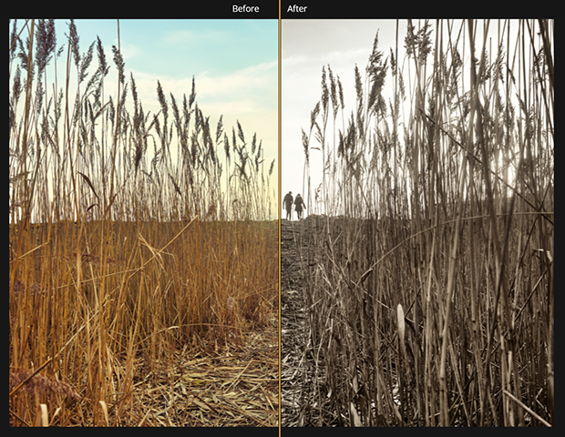 Image of wheat field divided down the middle. Left-hand is the original image, right-hand is the image with an LUT Mapping filter applied