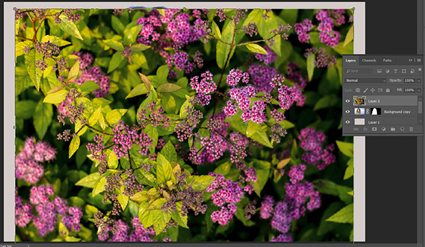 Layer with purple flower images