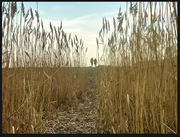 Original image of field with tall wheat stalks and two figures walking in the distance